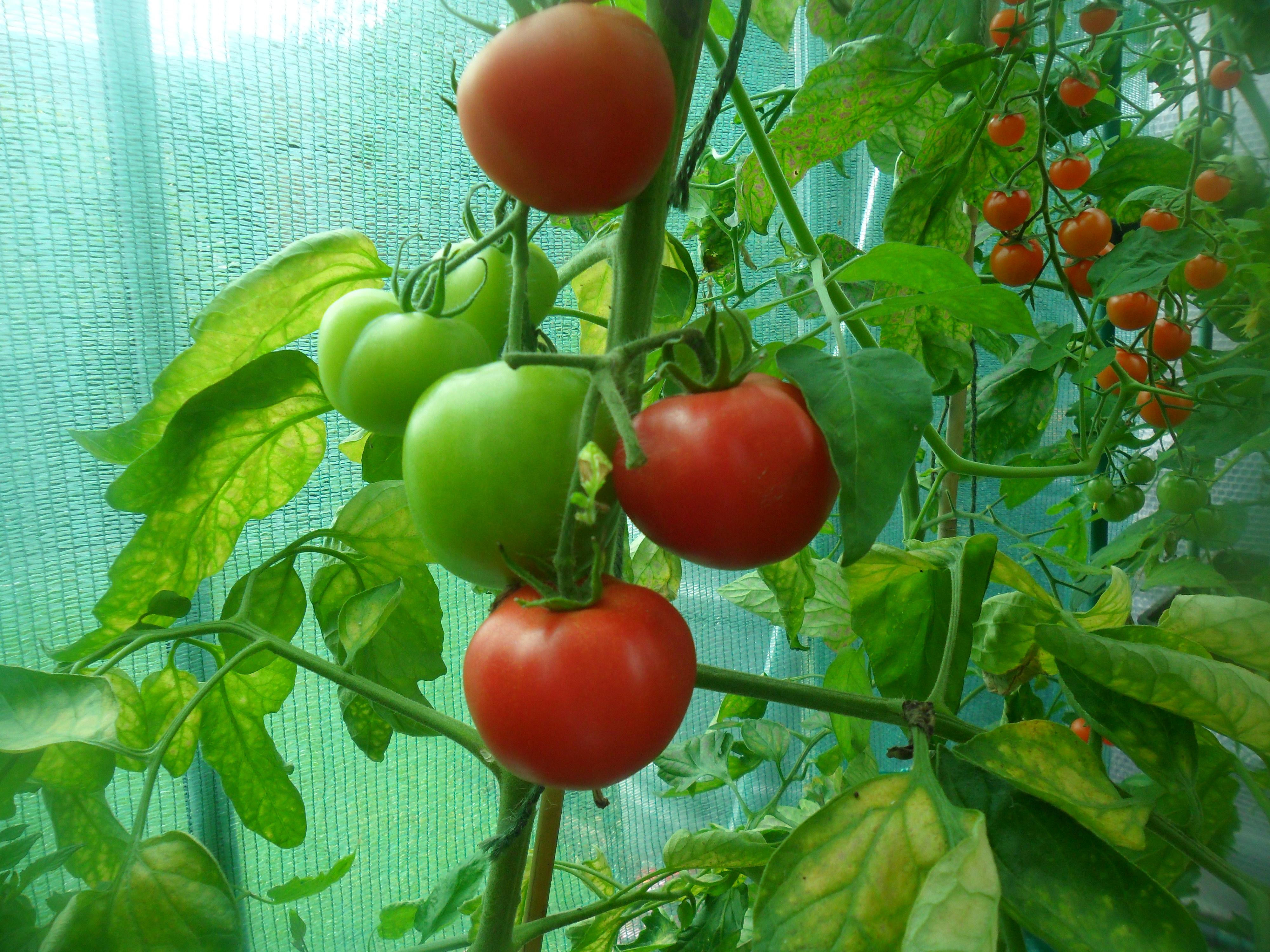 Поскъпват месните продукти и оранжерийните домати