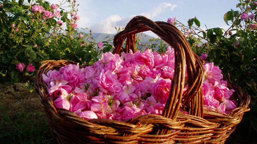 Ден на българската роза в Швейцария в навечерието на 24 май