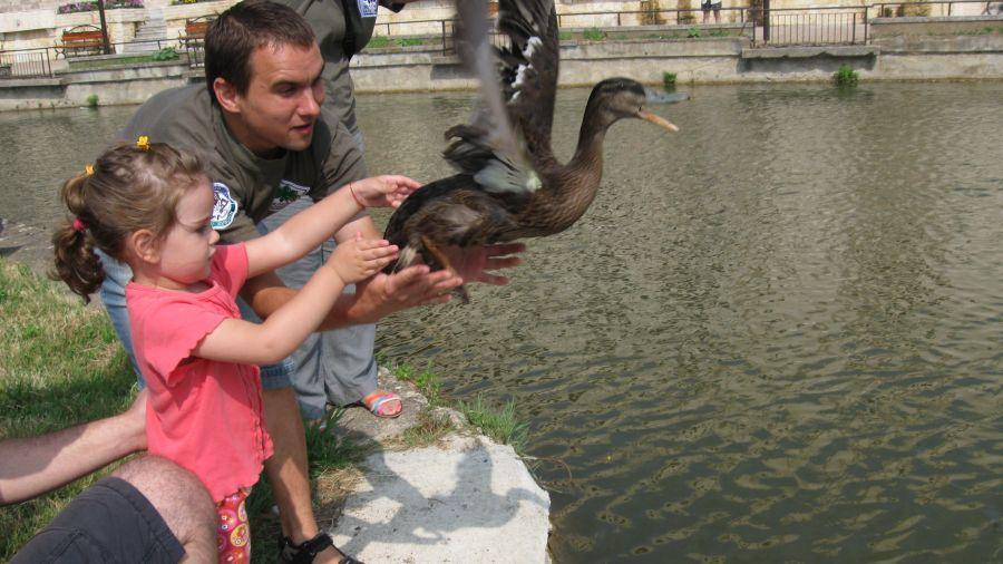 """Утре на езерото """"Загорка"""": Пускат на свобода зеленоглави патици"""