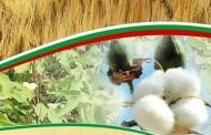 Учени от Института в Чирпан селектираха шоколадов памук