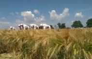 Жътвата започна, производителите очакват добра реколта