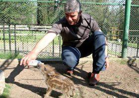 Мечки, тигри и елени радват децата в Старозагорския Зоопарк