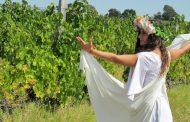 Духът на древните погали гроздовете на Шато Коларово