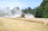 Зърнопроизводителите започват жътвата с очаквания