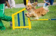 Празник за деца и кучета ще се проведе на 1 юни