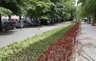 50 хиляди нови цветя украсяват Стара Загора