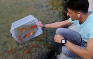 """50 златни рибки плуват в японското езерце в старозагорския парк """"Артилерийски"""""""