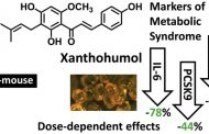 Ксантохумолът в бирата активира обезвреждането на токсини и има директна антивирусна активност