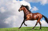 Застреляха 4 коня в Старозагорско