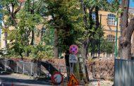 Жив плет заменя дърветата край Второ основно училище от юг
