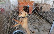Нов дом за безпризорни кучета изграждат в община Стара Загора