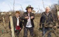 За двадесети път зарязват ритуално лозите в старозагорското село Малка Верея