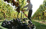 Приемат нови извънредни мерки в подкрепа на лозаро-винарския сектор