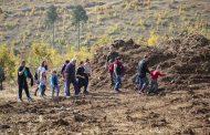 """10 000 фиданки от цер ще бъдат залесени в Магарешка поляна край квартал """"Дъбрава"""""""