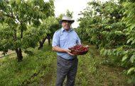 Допълнително подпомагане ще стимулира създаването на нови плодови насаждения