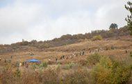 Отменят залесителната акция в местността Магарешка поляна