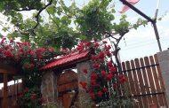 """""""Моята цветна градинка"""" става регионална надпревара"""