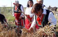В старозагорското село Пшеничево организират за втори път празник на пшеницата