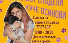Младежи организират кампания за осиновяване на бездомни кучета в Стара Загора