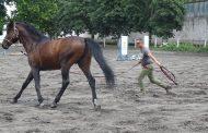 Конната база на Тракийски университет има нужда от доброволци, награда за труда ще е безплатна езда