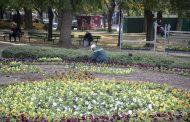 Хиляди нови цветя ще красят Стара Загора за празника на града